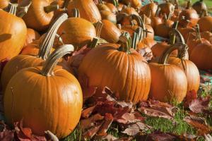 Save the Pumpkins