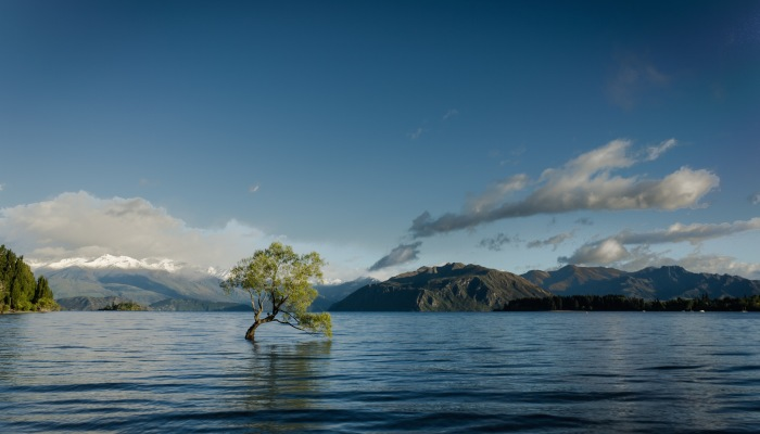 Lone Tree in the Middle of a Lake