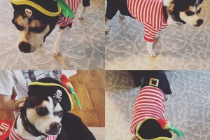 Buddy the Pirate Elf