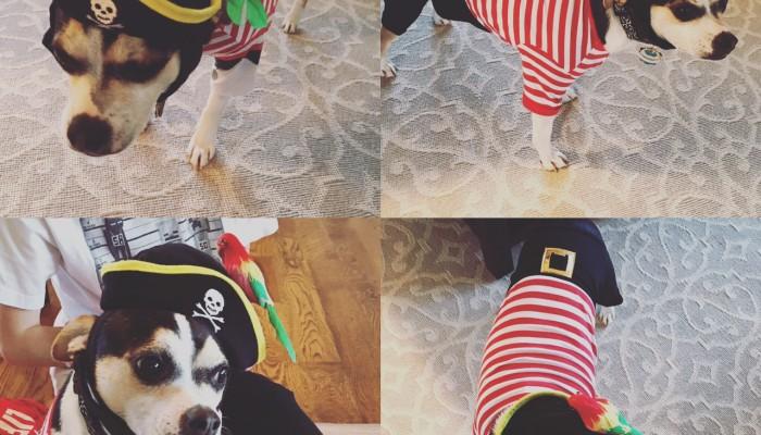 Buddy the Pirate Elf